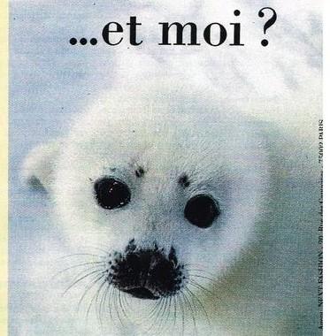 Moschino foca